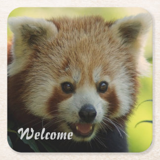 red panda square paper coaster