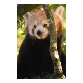 Red panda stationery paper