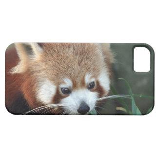 Red Panda, Taronga Zoo, Sydney, Australia Case For The iPhone 5