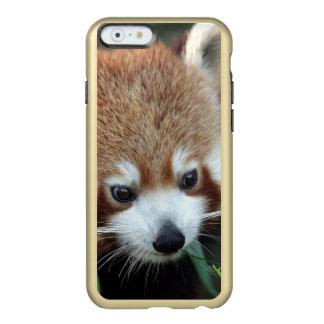 Red Panda, Taronga Zoo, Sydney, Australia Incipio Feather® Shine iPhone 6 Case