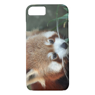 Red Panda, Taronga Zoo, Sydney, Australia iPhone 8/7 Case