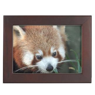 Red Panda, Taronga Zoo, Sydney, Australia Keepsake Box