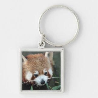 Red Panda, Taronga Zoo, Sydney, Australia Key Ring