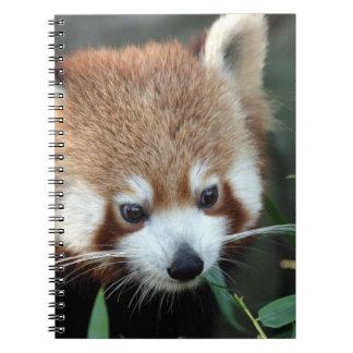 Red Panda, Taronga Zoo, Sydney, Australia Notebooks