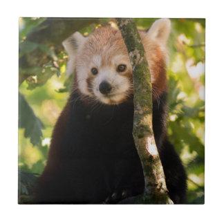 Red panda tile