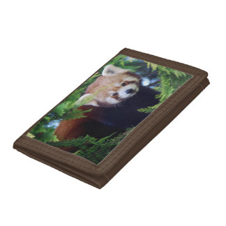 Red Panda Trifold Wallets