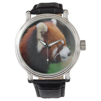 Red panda watches
