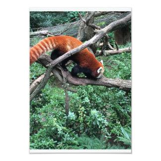 Red Panda Zoo Fur Card