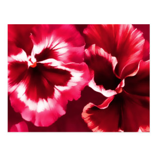 Red pansies fine art postcard