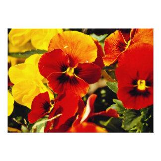 Red Pansies flowers Invitations