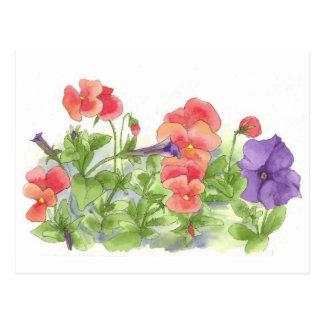 Red Pansies Purple Petunias Watercolor Flowers Postcard