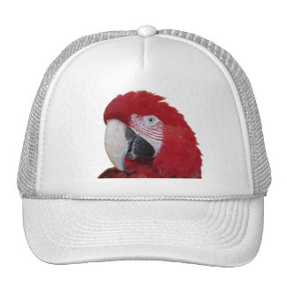 Red Parrot Cap Hat
