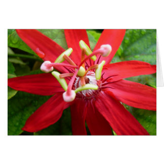 Red Passion Flower Card