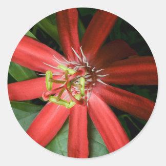 Red Passion Flower Round Sticker
