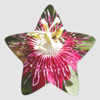 Red Passion Flower with Bee Star Sticker