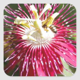 Red Passion Flower with Bee Square Stickers