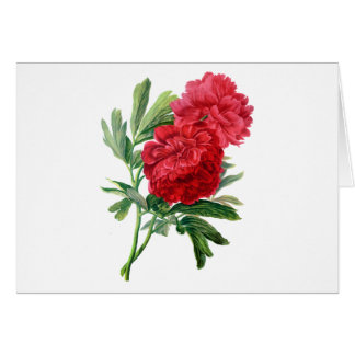 Red Peonies Drawn From Nature Card