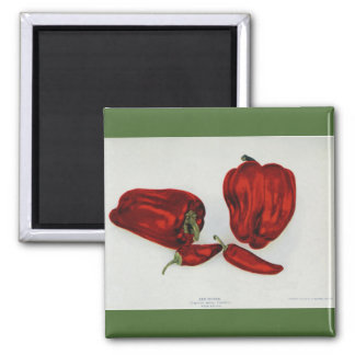 Red Pepper - Vintage Image Square Magnet