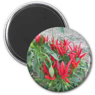 Red peppers hanging on the plant 6 cm round magnet