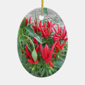 Red peppers hanging on the plant ceramic oval decoration