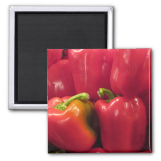 Red Peppers... Square Magnet