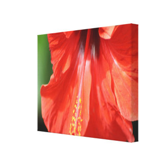 Red Petal and Anther with Pistil Hibiscus Flower Stretched Canvas Print