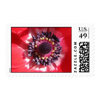 Red Petals in micro Postage Stamp