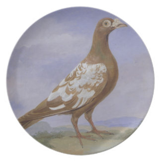 Red Pied Carrier Pigeon (oil on canvas) Plate