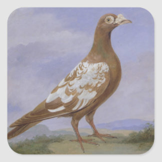 Red Pied Carrier Pigeon (oil on canvas) Square Sticker