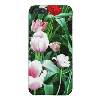 Red & Pink Tulips Pictures iPhone 5 Cover