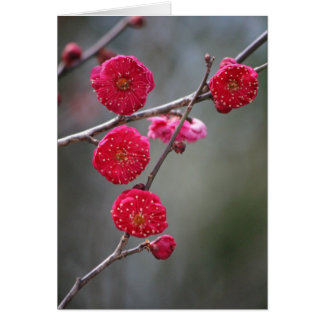 Red plum blossoms (flower of red plum) card