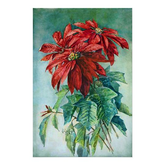 Red Poinsettia Flowers Vintage Painting Poster