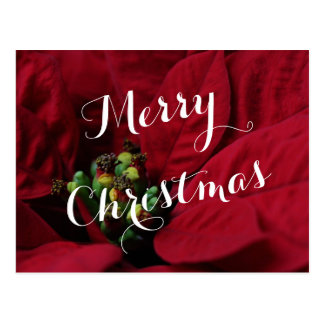 Red Poinsettia Merry Christmas Postcard