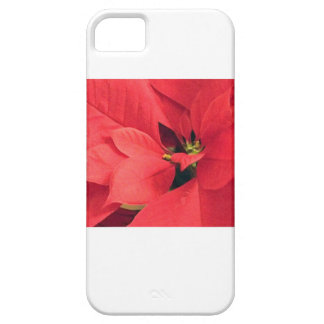 Red Poinsettia Photo Phone Cover Barely There iPhone 5 Case