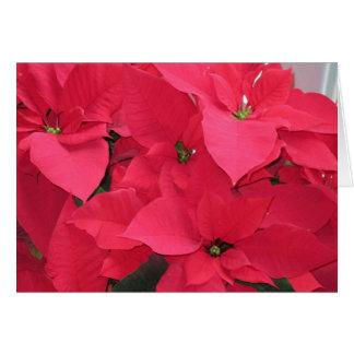 Red Poinsettias Card