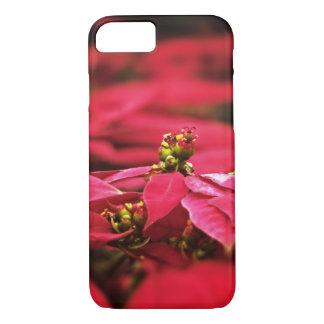 Red Poinsettias Flowers iPhone 7 Case
