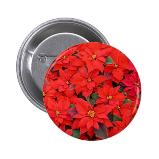 Red Poinsettias I Christmas Holiday Floral 6 Cm Round Badge