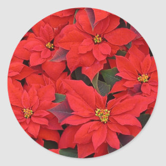 Red Poinsettias I Christmas Holiday Floral Photo Classic Round Sticker