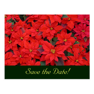 Red Poinsettias Save the Date Postcard