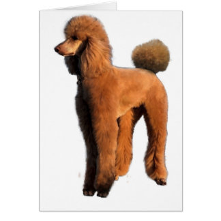 red poodle card