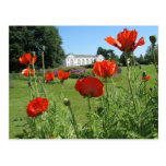 Red Poppies at Kew Gardens Postcard