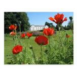 Red Poppies at Kew Gardens Postcard