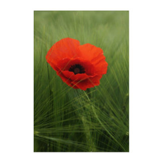 Red Poppies Flower Spring Acrylic Wall Art