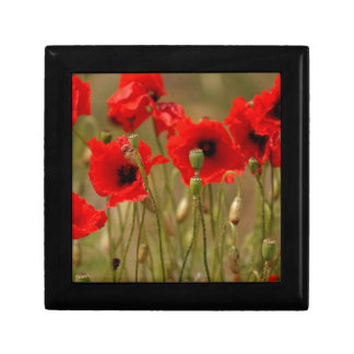 Red Poppies Gift Boxes