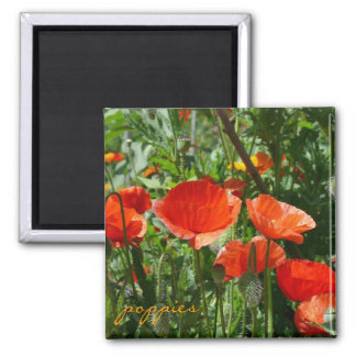 Red Poppies Magnets