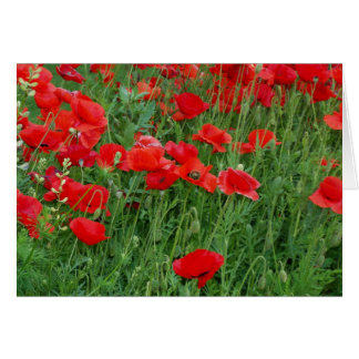 Red Poppies Photographic Greeting Card Blank