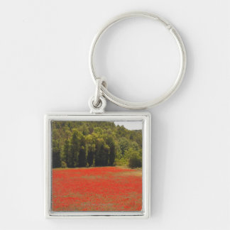 Red poppies spring Provence France Key Ring