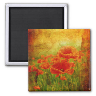 Red poppies vintage magnets