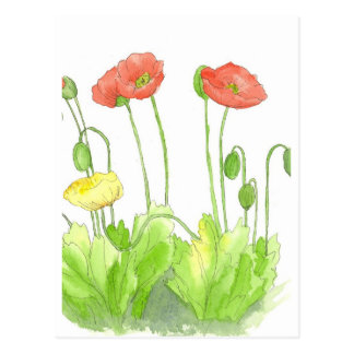 Red Poppies Watercolor Wildflower Garden Art Postcard
