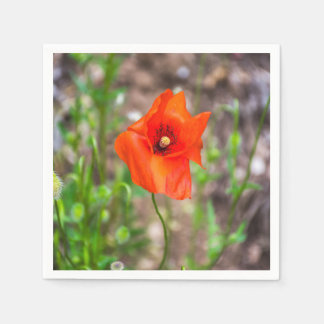 Red poppy disposable napkins